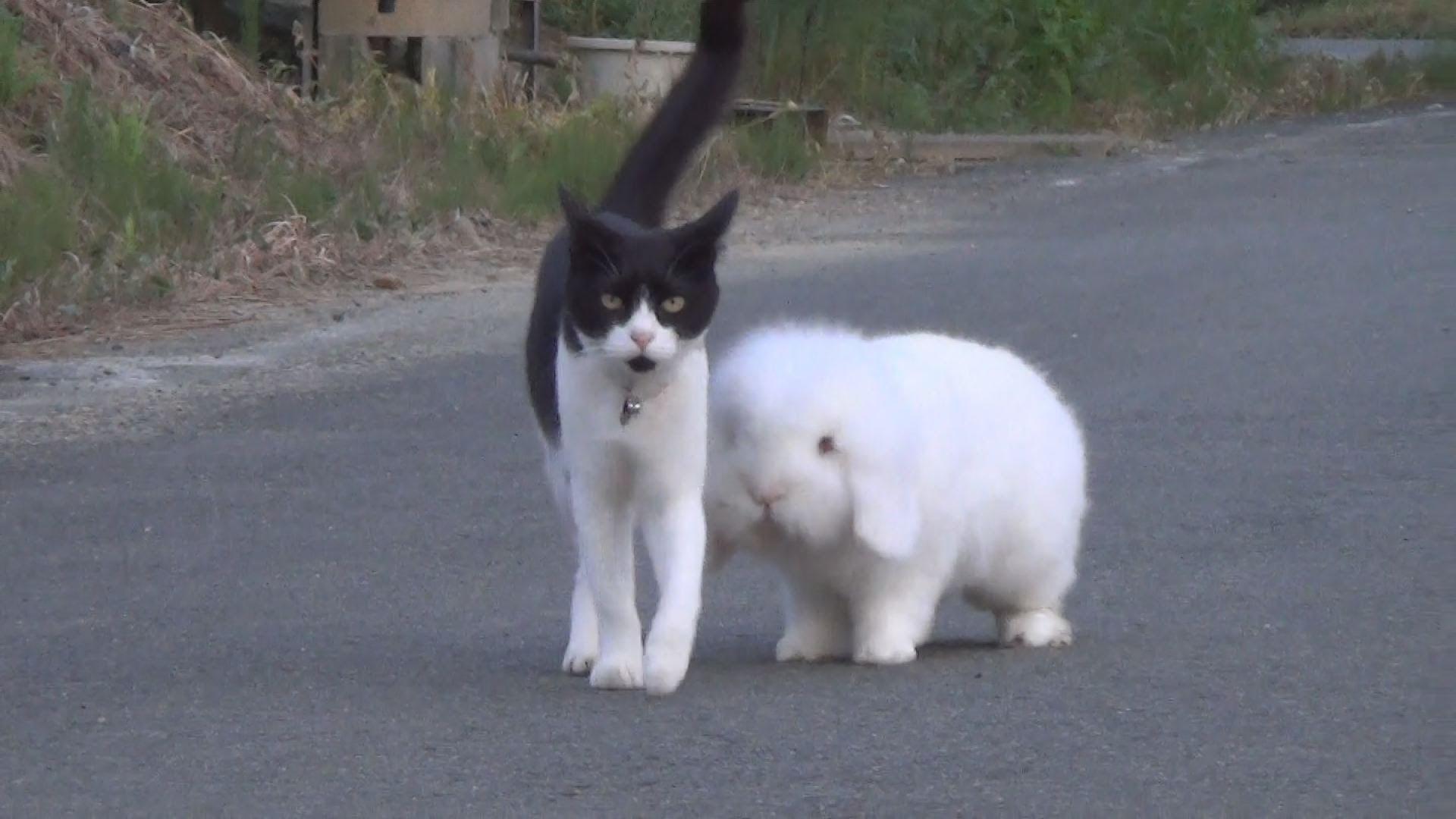 「まるできょうだい」 猫とウサギ一緒に散歩