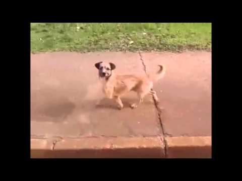 【泣ける】飼い主を運ぶ救急車を追う犬