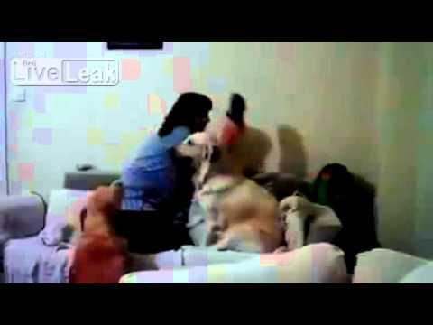 子どもを殴ろうとする母親から子どもを守る犬