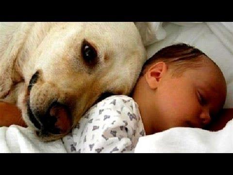 赤ちゃんと動物